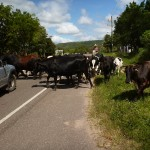 Traffic.  Near the Honduran/Nicaraguan border.