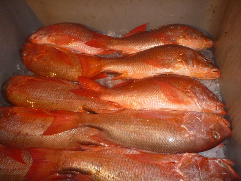 Fish in Jaque being readied for transport ot Panama City